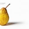Pear, Stratford Upon Avon, Warwickshire
