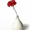 Flower, Stratford Upon Avon, Warwickshire