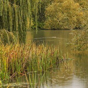 Warwickshire, Wedding, Photographer, Mercure Walton Hall, Venue, Wellesbourne, Leamington Spa, Stratford-upon-Avon, Cotswolds, Event, Bride & Groom, Warwick, Formal Bridal