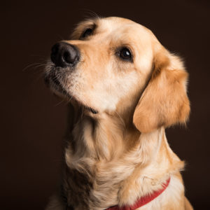 Warwick, Photographer, Pet, Dog, Photography, Studio, Portrait, Stratford-upon-Avon, Warwickshire, Leamington Spa, Kenilworth, Cotswolds