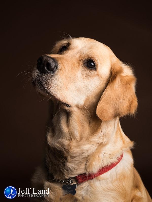 Warwick, Photographer, Pet, Dog, Photography, Studio, Portrait, Stratford-upon-Avon, Warwickshire, Leamington Spa, Kenilworth, Cotswolds, Stratford upon Avon