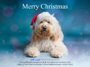 Wishing you a Merry Christmas from Jeff Land Photography