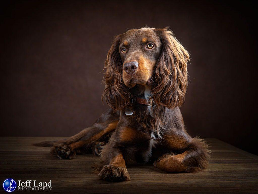 Photographer, Photography, Studio, Portrait, Stratford-upon-Avon, Warwickshire, Leamington Spa, Kenilworth, Cotswolds, Pet
