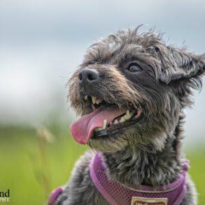 Small Dog, Pet, Portrait, Photographer, Stratford upon Avon, Warwickshire, Cotswold