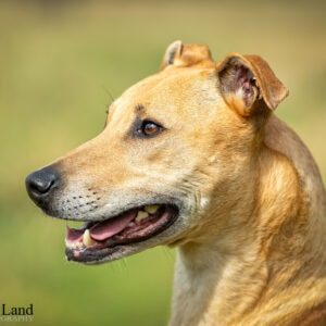 Dog, Pet, Portrait, Photographer, Stratford upon Avon, Warwickshire, Cotswold