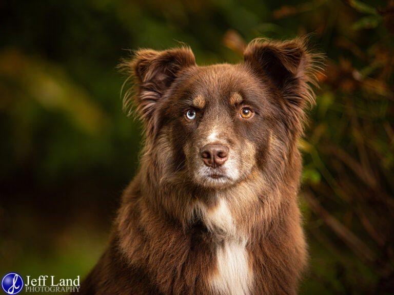 Pet Portrait Photographer based in Stratford upon Avon, Warwickshire